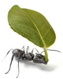 Ant carrying aleaf